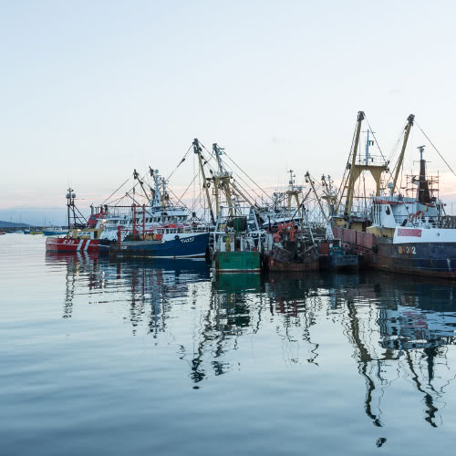 How fish gets from boat to plate link